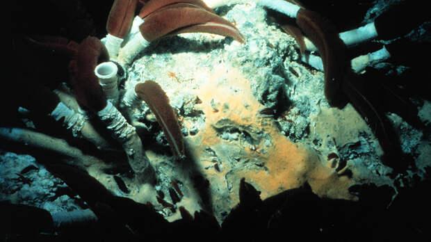 Круче, чем в «Дюне»: самые отмороженные черви Земли