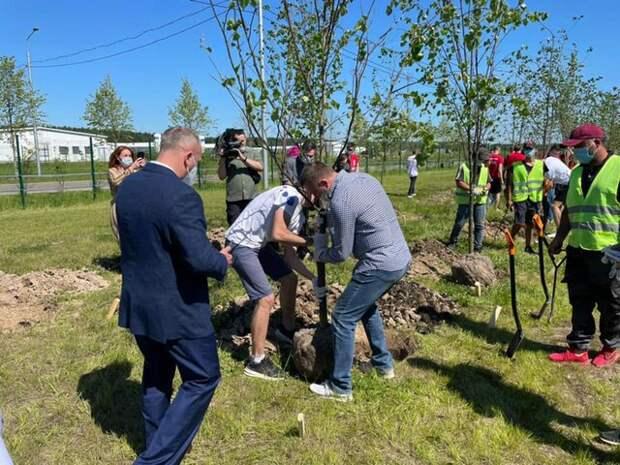 Депутат Госдумы Саблин с волонтерами высадил липовую аллею в благодарность врачам в ТиНАО