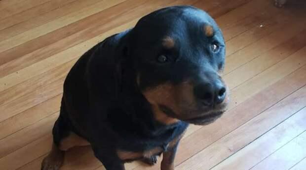 Пока хозяйки нет дома, собака ворует хлеб, прячет его, но не съедает и кусочка. Причина её поступка в любви к семье