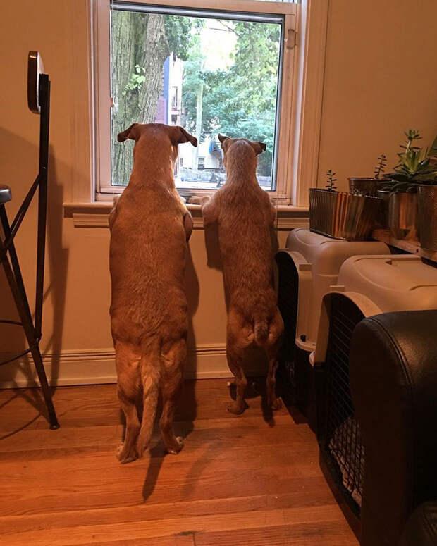 Собака встречает своего «близнеца», Бетани Колман, Роуг и Бист