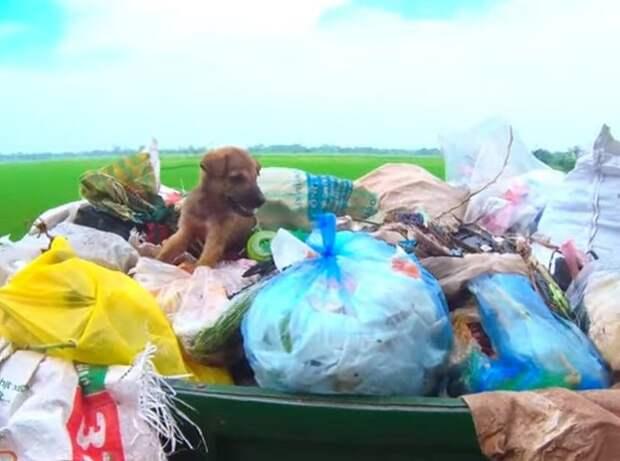 Парень обнаружил в мусоре мешок, где он заметил обычного щенка