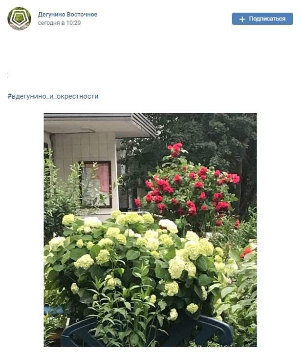 Фото  дня: цветущий палисадник на улице 800-летия Москвы