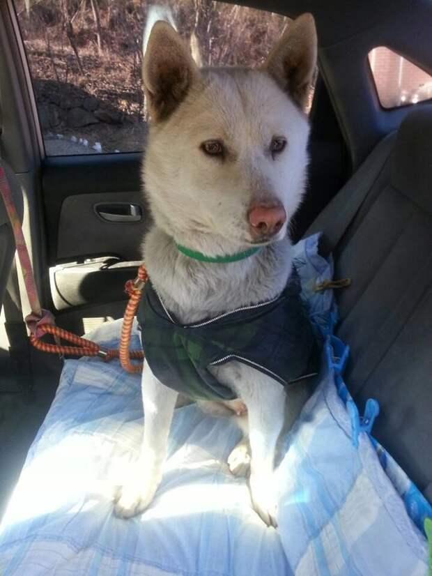 История спасения больной собаки, которая жила на свалке