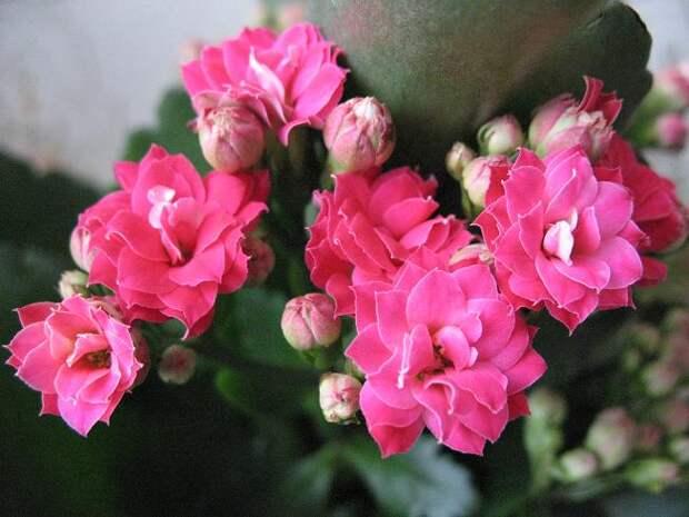 Отростки разных комнатных цветочков! as a gift (Челябинск). DaruDar