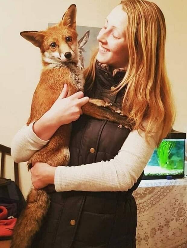 Хозяйка в ней души не чает и обожает фотографироваться с рыжей красавицей добро, домашний питомец, животные, история, лиса, собака