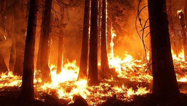 315 пожаров потушили в лесах Подмосковья в 2019 году