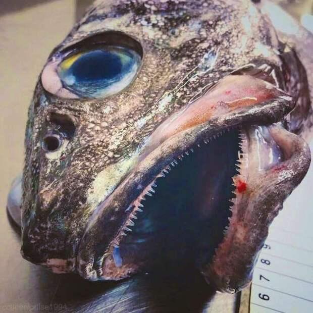 Странные существа из морских глубин, пойманные Романом Федорцовым