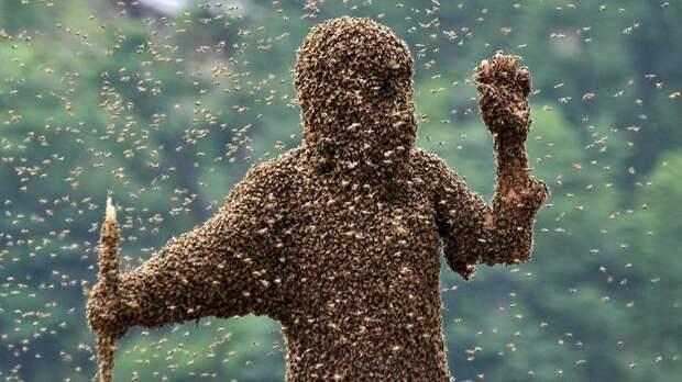 Африканские пчелы - одни из самых агрессивных среди насекомых инсектофобия, интересное, много, насекомые, природа, рой, скопление
