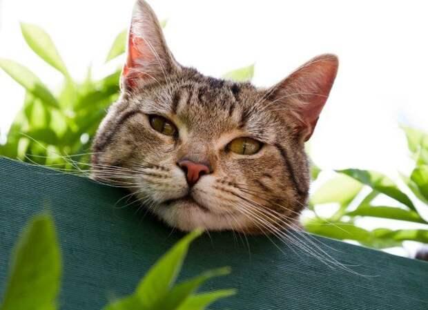 кот в огороде