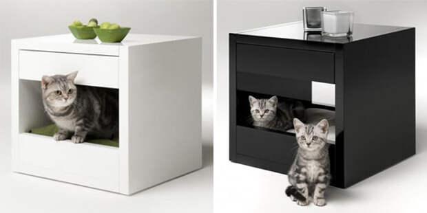 Дизайн для котов (24 фото)