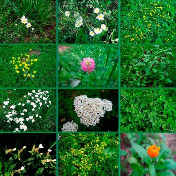 Лекарственные растения - вновь проведенные древние знания