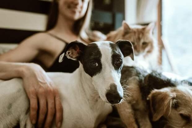 Бесплатная вакцинация домашних животных от бешенства пройдет в Верескине 7-8 августа