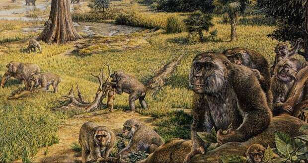Ученые выяснили, что доисторические обезьяны переплывали Атлантику