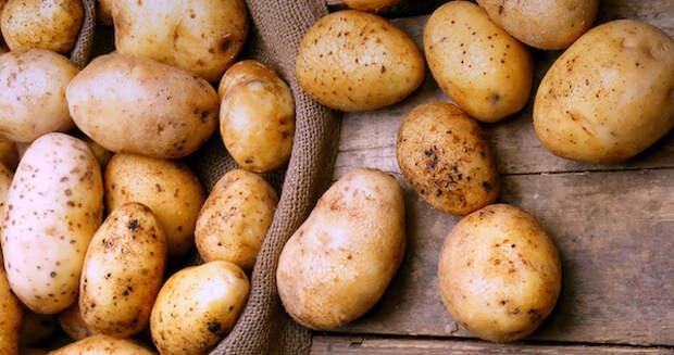 Вот как выращивают картошку в Финляндии - есть чему поучиться!