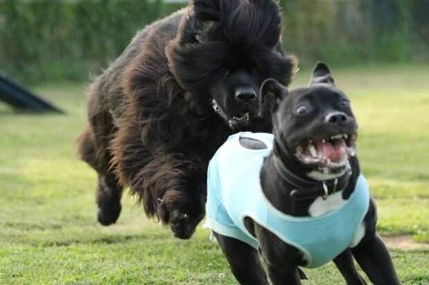 Забавные картинки и смешные фото приколы для настроения (11 фото)