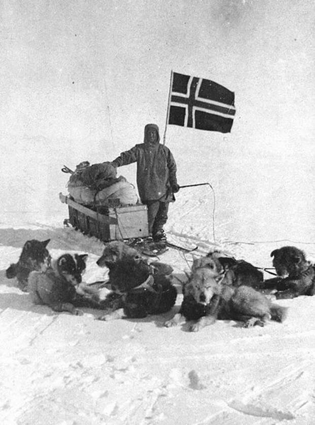 Руаль Амундсен с ездовыми собаками, 14 декабря 1911 года