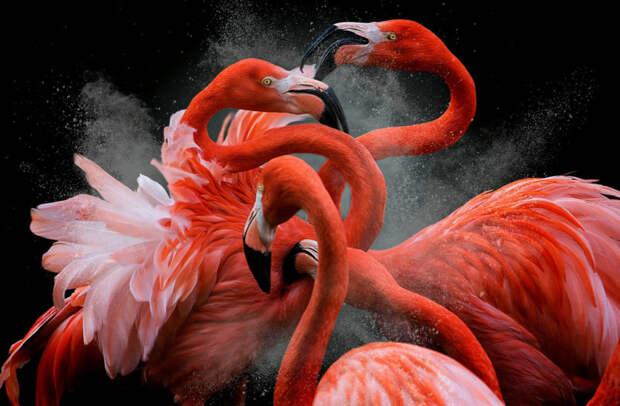 Лучшие работы с конкурса «Bird Photographer of the Year»