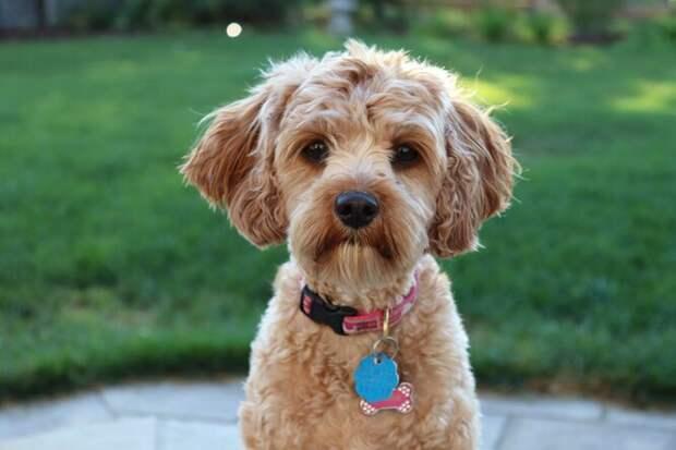 Маленький пес неотходил отхозяйки прижизни — ине оставил ее после смерти