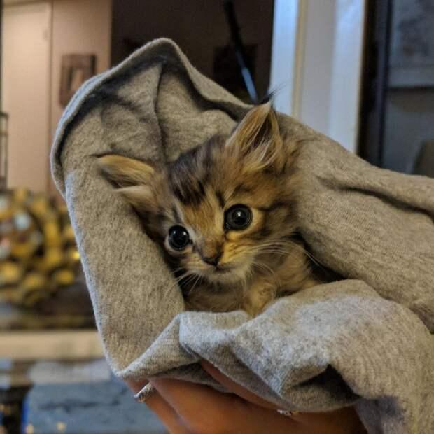 Котенка с вывернутыми задними лапками спасли от усыпления и готовят к операции