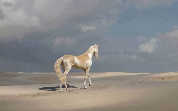 Одна из самых красивых лошадей в мире: Ахал-Теке