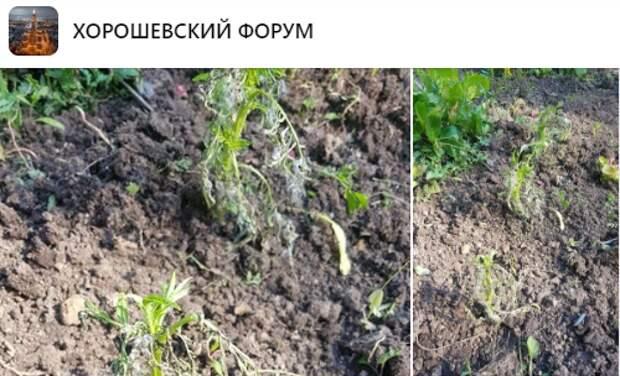 «Жилищник» предупредили о своевременном поливе цветов в Чапаевском парке
