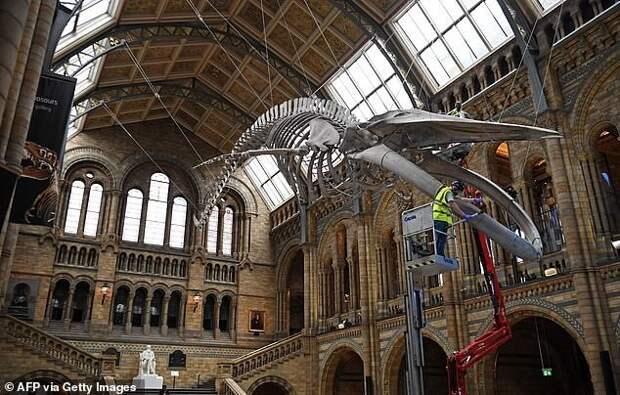 Дарвина уволят из Музея естественной истории