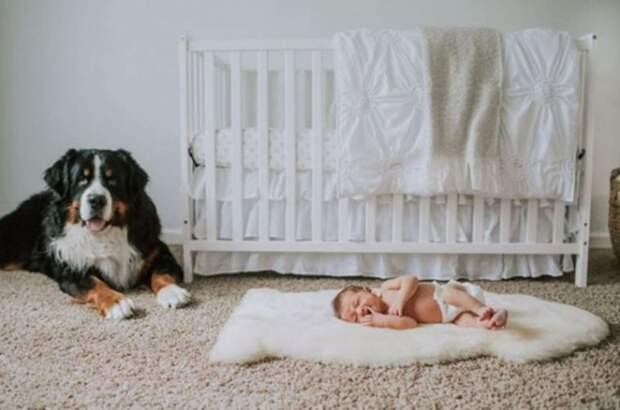 Собака заботилась о маленьком ребенке, словно настоящая мама
