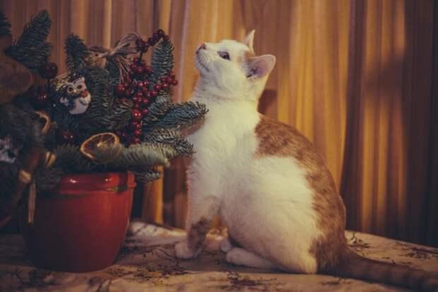 Двухмесячный котенок выживал в запертом доме без отопления и воды в полном одиночестве кот, котенок, рыжий котенок