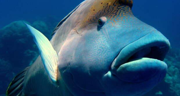 Рыбы впали в депрессию из-за коронавируса