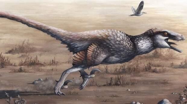 В Бразилии нашли останки пернатого динозавра размером с курицу