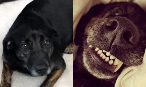10. «Знакомьтесь, это Петунья! Слева её фото из приюта, а справа — у нас дома» в мире, добро, животные, забота, кошка, собака, спасение, тогда и сейчас