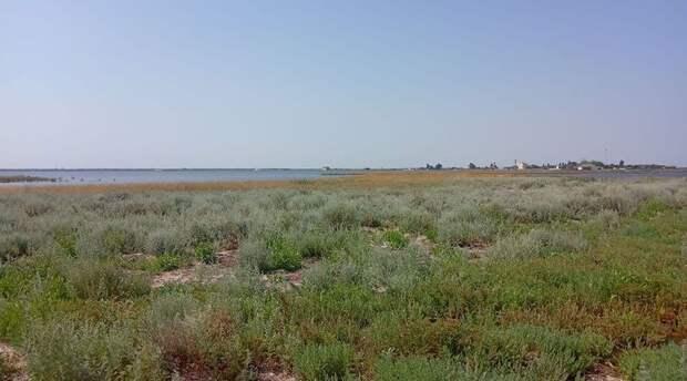 Перекрытие Северо-Крымского канала повлияло на флору и фауну Лебяжьих островов