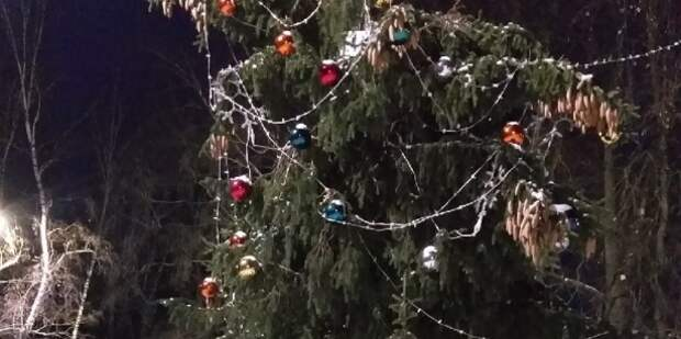 Под Тулой новогоднюю елку разобрали, не дожидаясь праздника