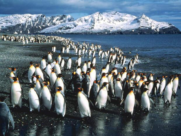 Почему американцы будут бомбить Антарктиду: