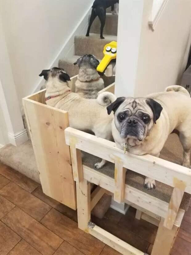 Как выглядит собачий лифт, который американка построила дома для стареньких мопсов