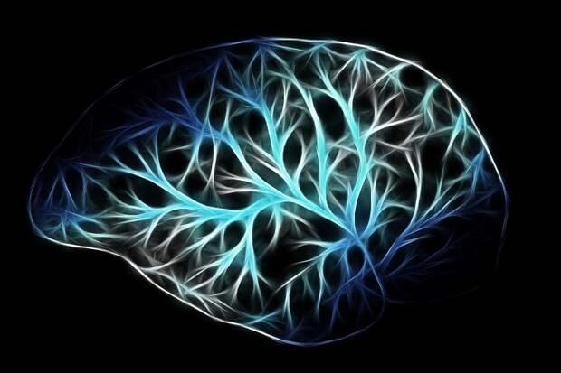 Успех и здоровый мозг