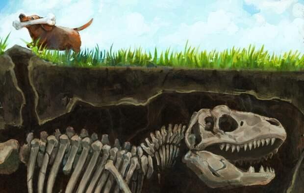 Почему собаки закапывает кости в землю? волк, вопросы, домашние животные, животные, ответы, собаки, факты, шарик