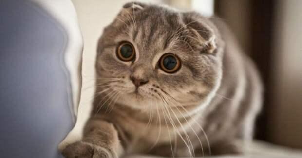 Взгляд впустоту: видятли кошки что-то потустороннее, недоступное нашему глазу