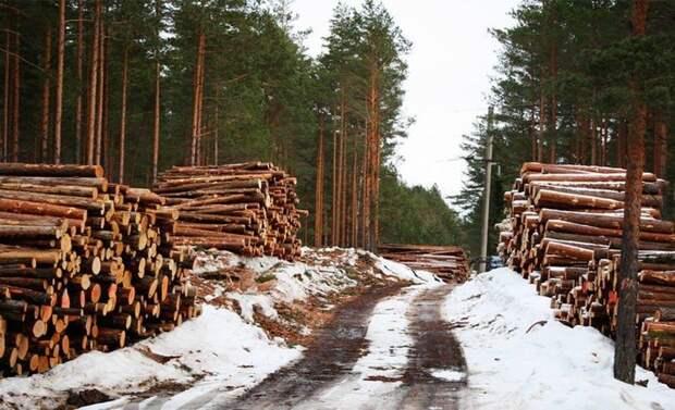 Родной лес по европейским ценам: Украина начала выкупать свою древесину из ЕС