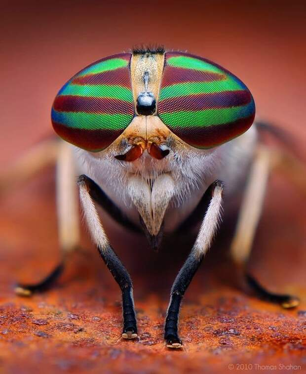 """Мы и не догадываемся с каким выражением """"лица"""" они смотрят на нас виды, красиво, лица, насекомые, природа, фото"""