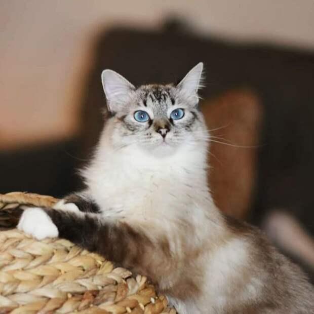 девушка нашла котенка