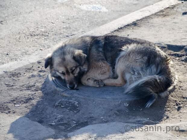 Власти Ижевска определились с местом размещения будущего приюта для бездомных животных