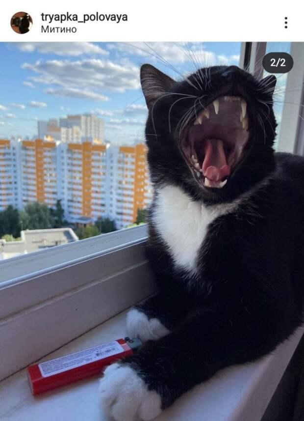 Фото дня: кот из Митина — за здоровый образ жизни