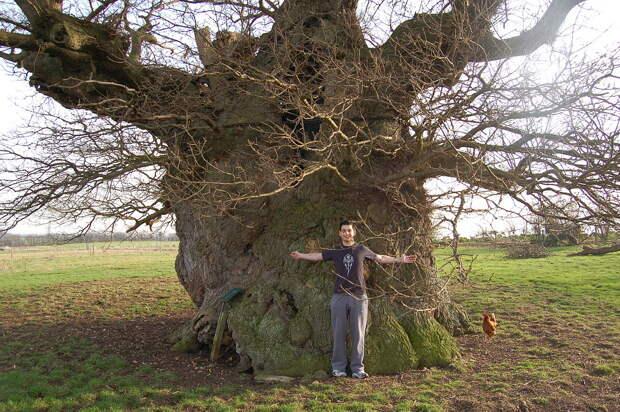 Картинки по запросу bowthorpe oak in lincolnshire