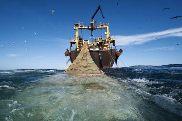 Российские рыбаки честно признались, почему продают улов за границу