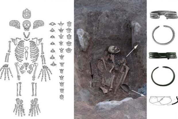 Обнаруженный скелет