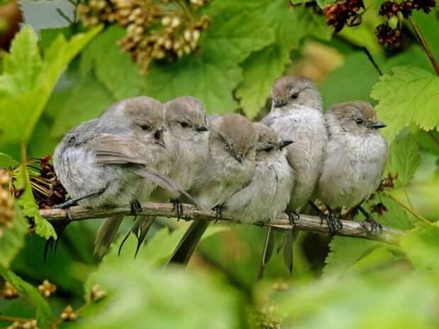 Необыкновенно умная и осторожная птица размером до 18 см и весом не более 35 г.