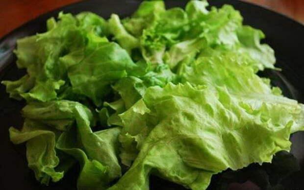 Листья салата можно и резать, и рвать руками. |Фото: bolshoyvopros.ru