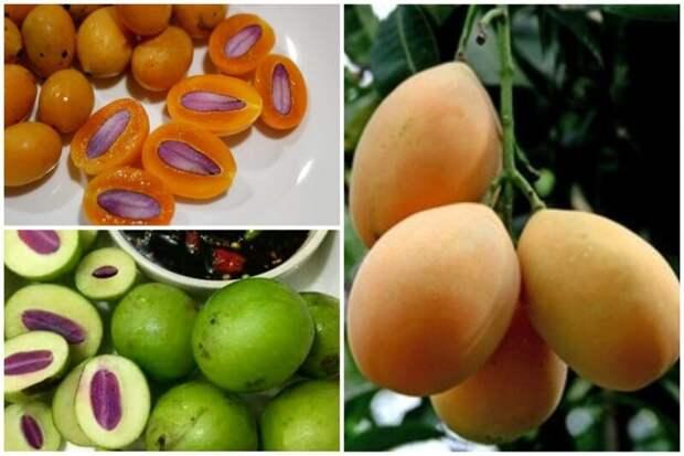 Буэа крупноли́стная, Гандария, или Марианская слива (лат. Bouea macrophylla) — плодовое дерево семейства Сумаховые, происходящее из Юго-Восточной Азии, близкий родственник манго еда, интересное, неизвестные, плоды, природа, растения, съедобные, фрукты