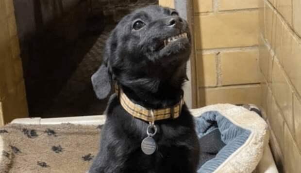 Приюсткий щенок так хотел найти хозяина, что даже научился улыбаться!